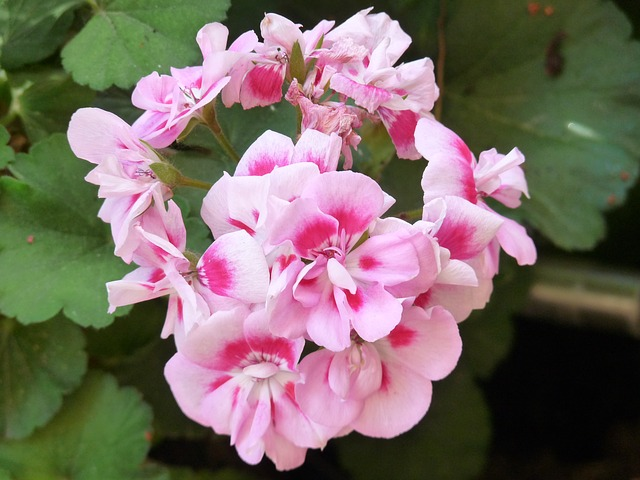 flores de temporana verano