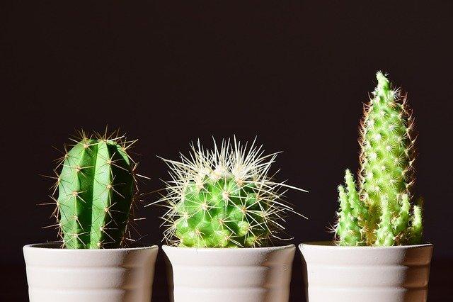 cactus resistentes al calor