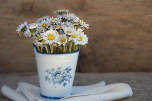 flores que resisten al sol
